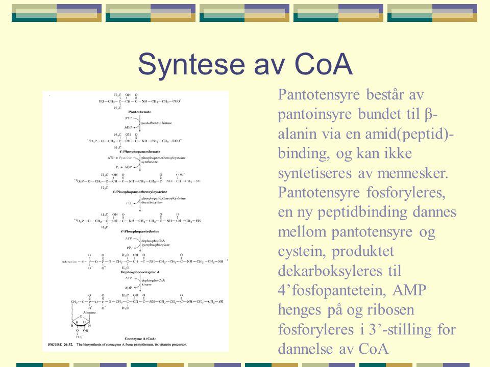 Syntese av CoA