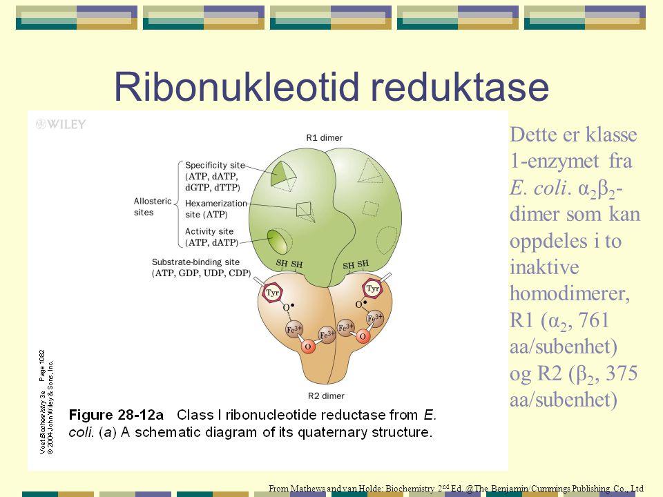 Ribonukleotid reduktase