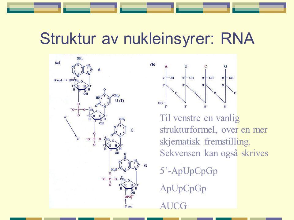 Struktur av nukleinsyrer: RNA