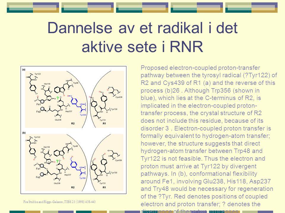 Dannelse av et radikal i det aktive sete i RNR