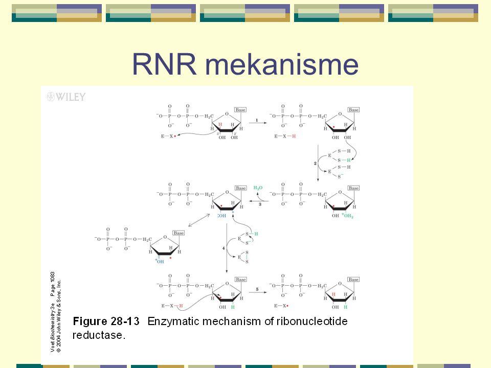 RNR mekanisme