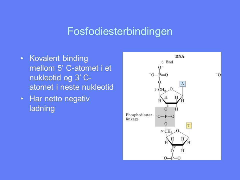 Fosfodiesterbindingen