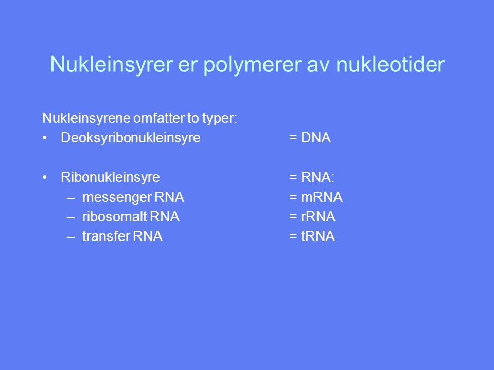 Nukleinsyrer er polymerer av nukleotider