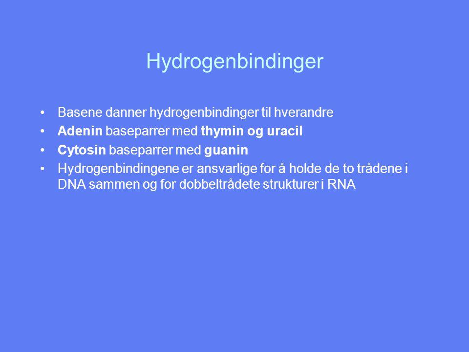 Hydrogenbindinger Basene danner hydrogenbindinger til hverandre
