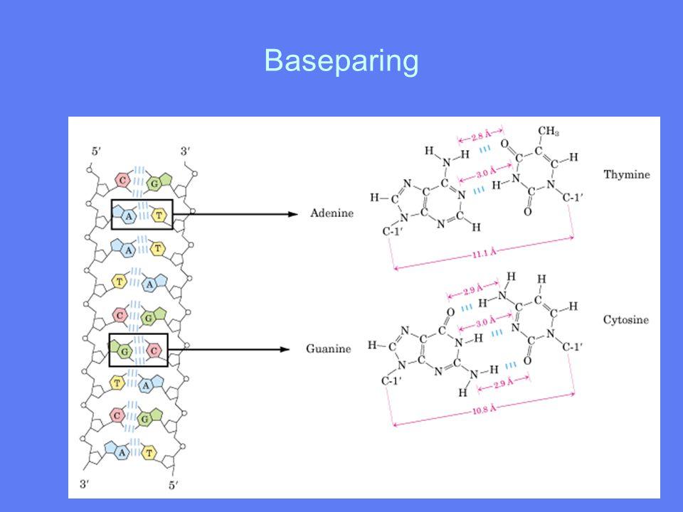 Baseparing