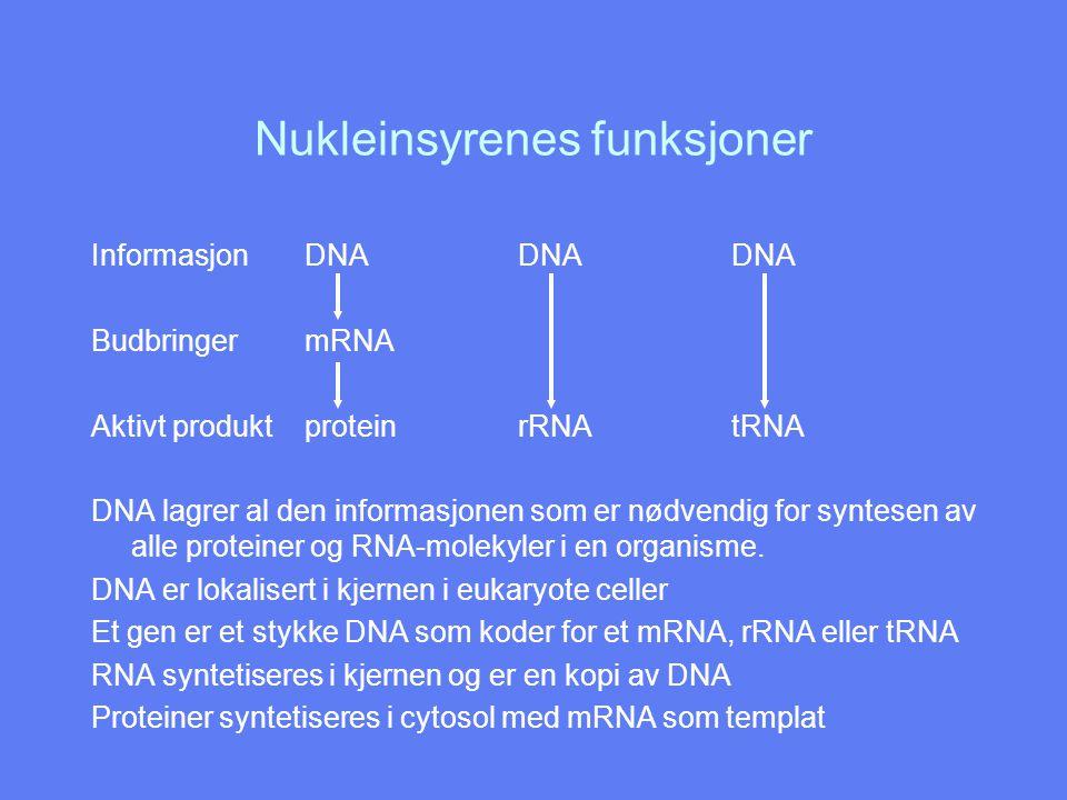 Nukleinsyrenes funksjoner