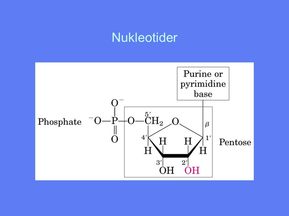 Nukleotider