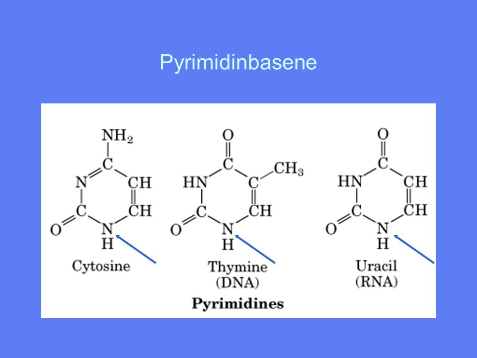 Pyrimidinbasene