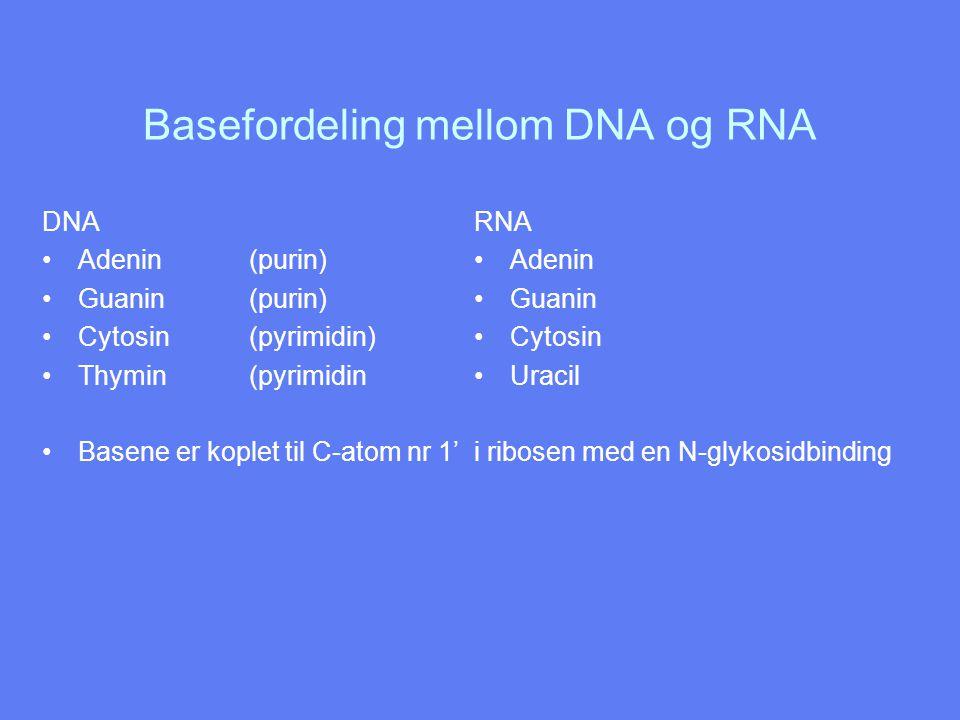 Basefordeling mellom DNA og RNA