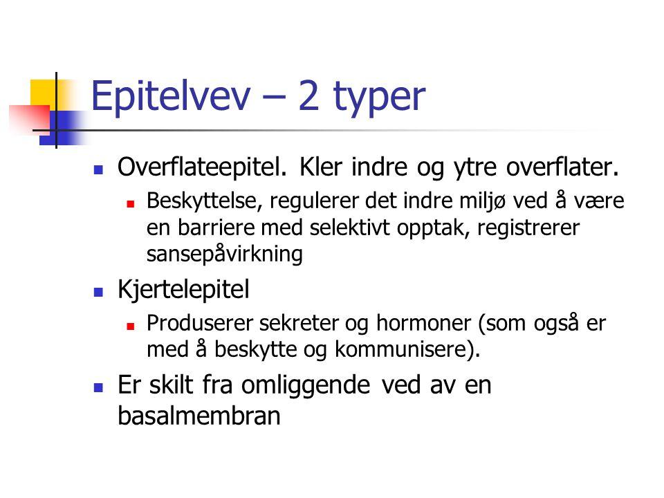 Epitelvev – 2 typer Overflateepitel. Kler indre og ytre overflater.