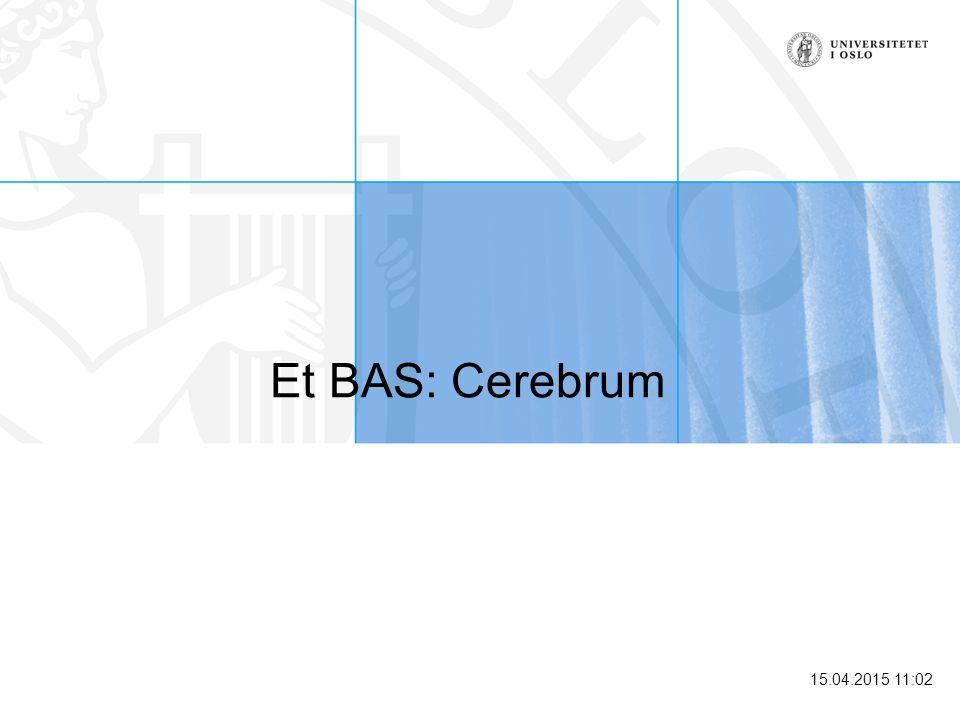 Et BAS: Cerebrum