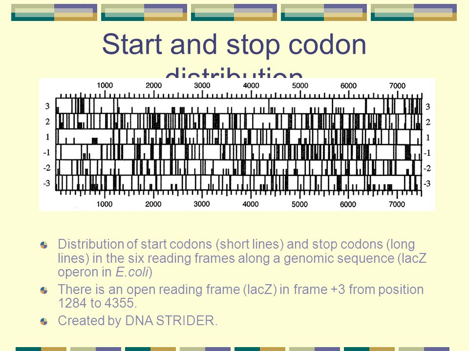 Start and stop codon distribution
