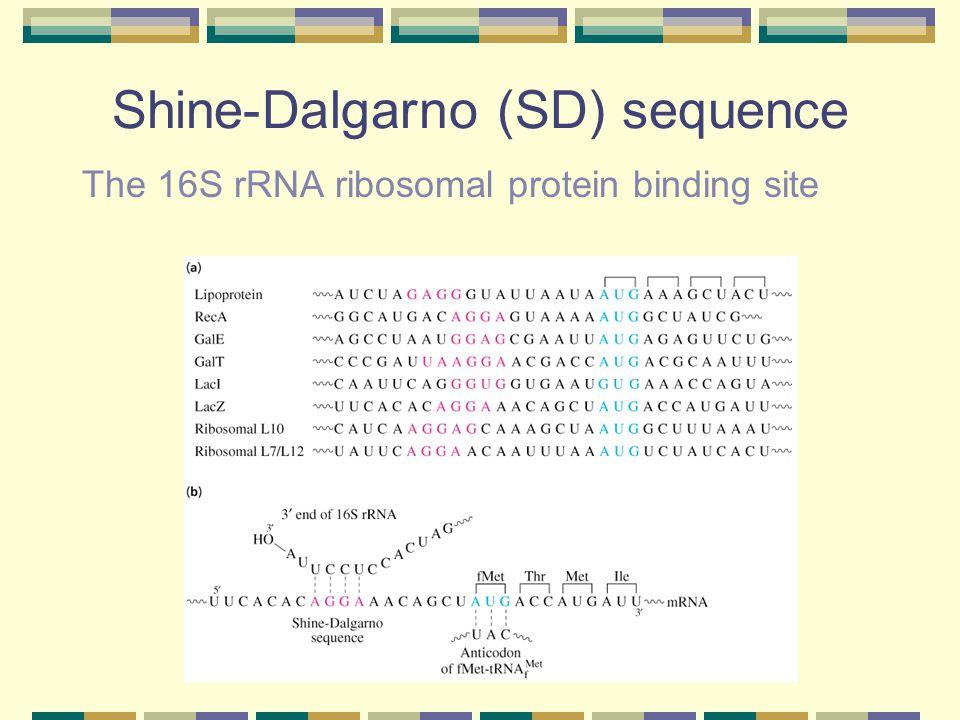 Shine-Dalgarno (SD) sequence
