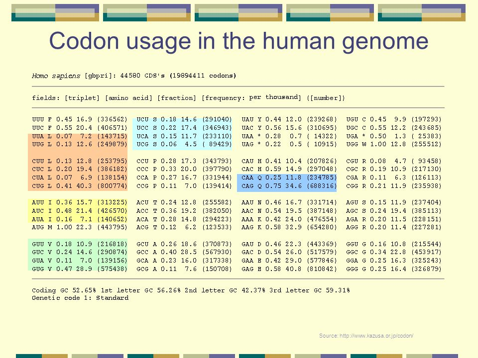 Codon usage in the human genome