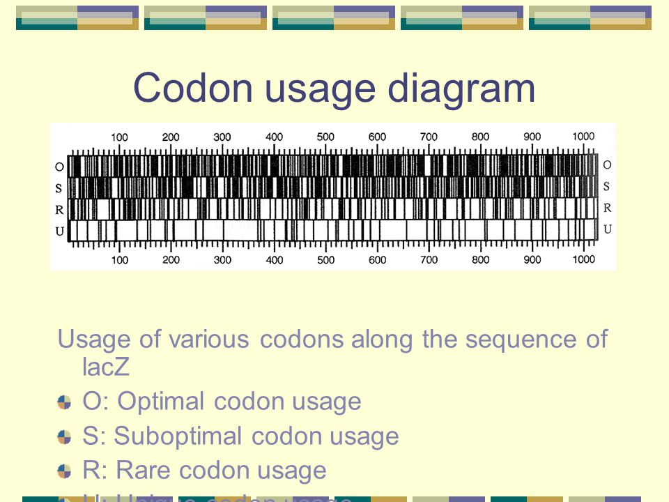 Codon usage diagram Usage of various codons along the sequence of lacZ
