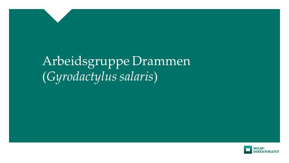 Arbeidsgruppe Drammen (Gyrodactylus salaris)