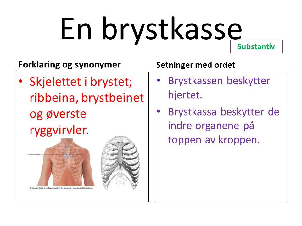 En brystkasse Substantiv. Forklaring og synonymer. Setninger med ordet. Skjelettet i brystet; ribbeina, brystbeinet og øverste ryggvirvler.