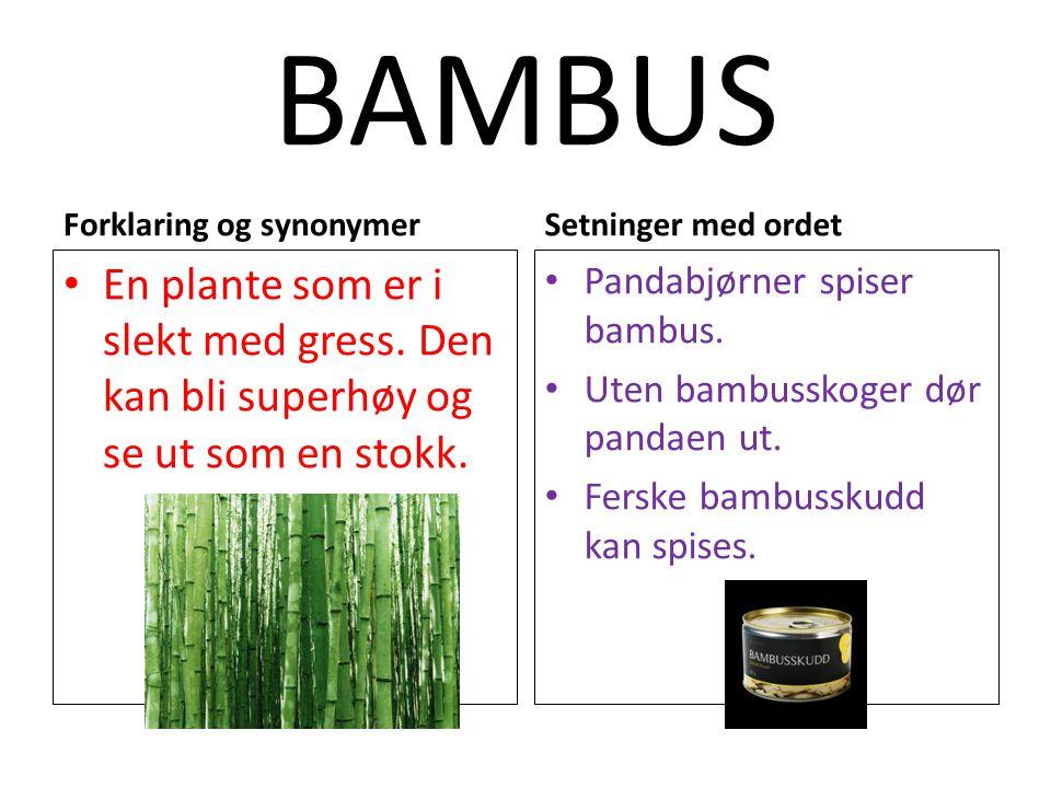 BAMBUS Forklaring og synonymer. Setninger med ordet. En plante som er i slekt med gress. Den kan bli superhøy og se ut som en stokk.