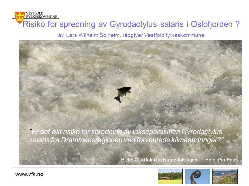 Risiko for spredning av Gyrodactylus salaris i Oslofjorden