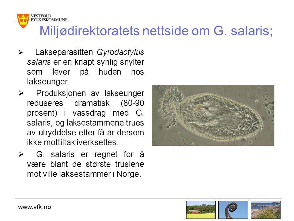 Miljødirektoratets nettside om G. salaris;