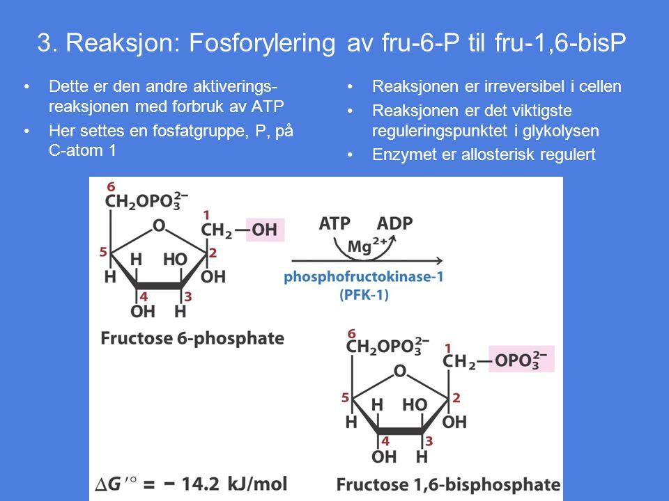 3. Reaksjon: Fosforylering av fru-6-P til fru-1,6-bisP
