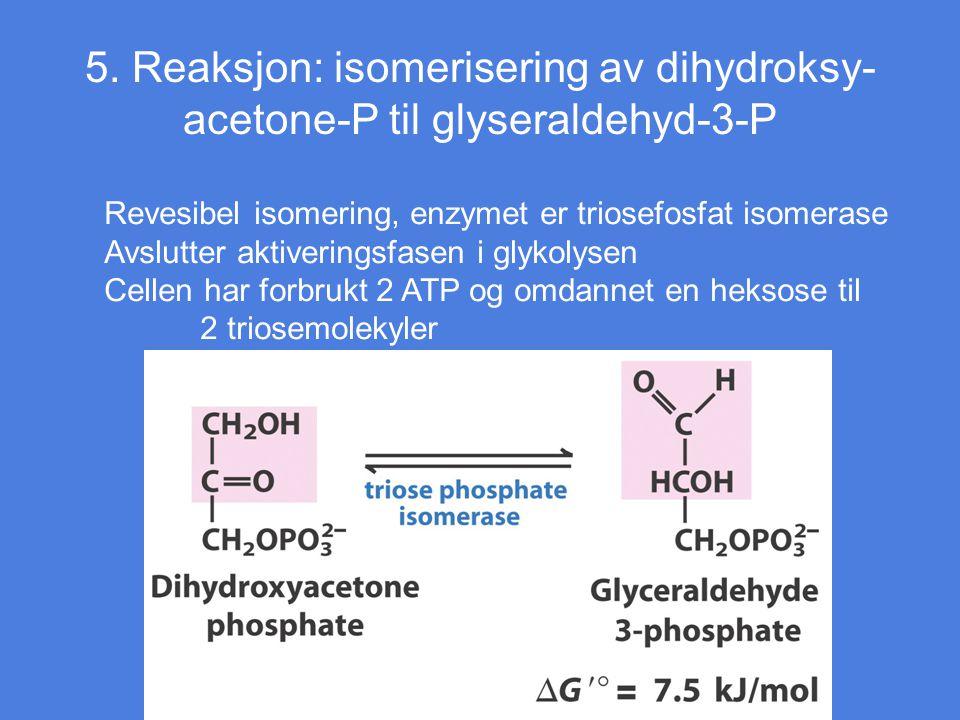 5. Reaksjon: isomerisering av dihydroksy-acetone-P til glyseraldehyd-3-P