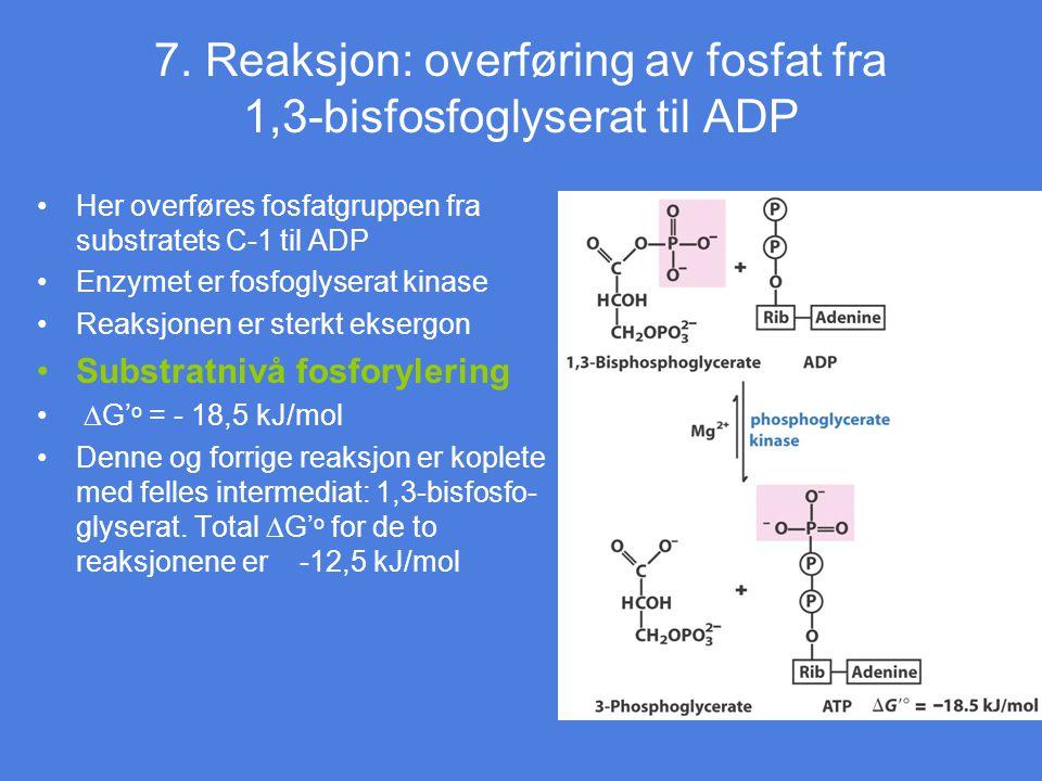7. Reaksjon: overføring av fosfat fra 1,3-bisfosfoglyserat til ADP