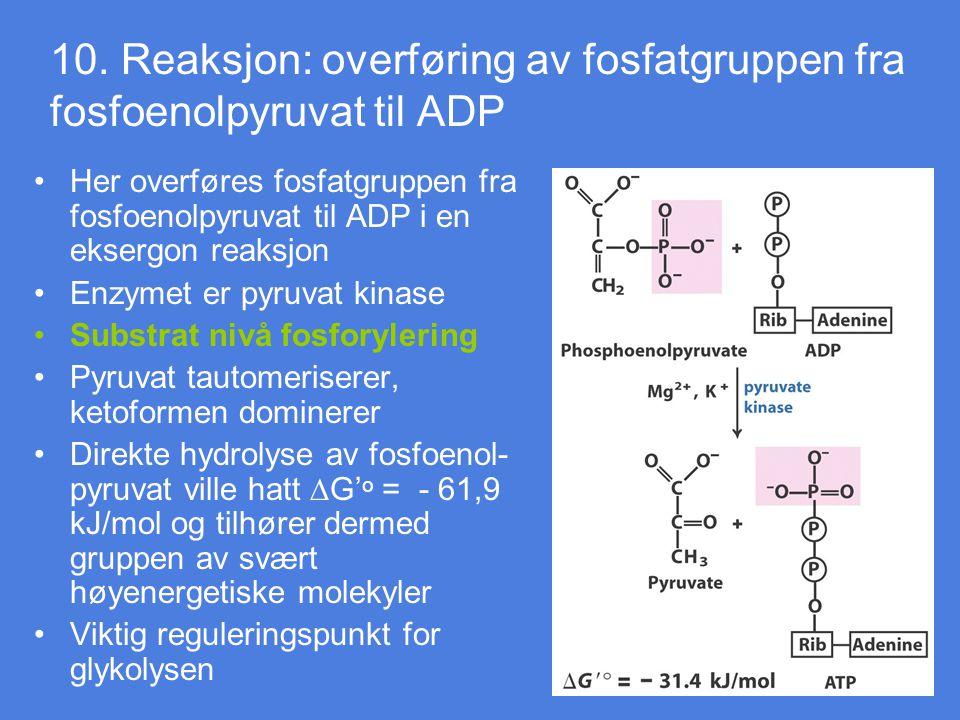 10. Reaksjon: overføring av fosfatgruppen fra fosfoenolpyruvat til ADP