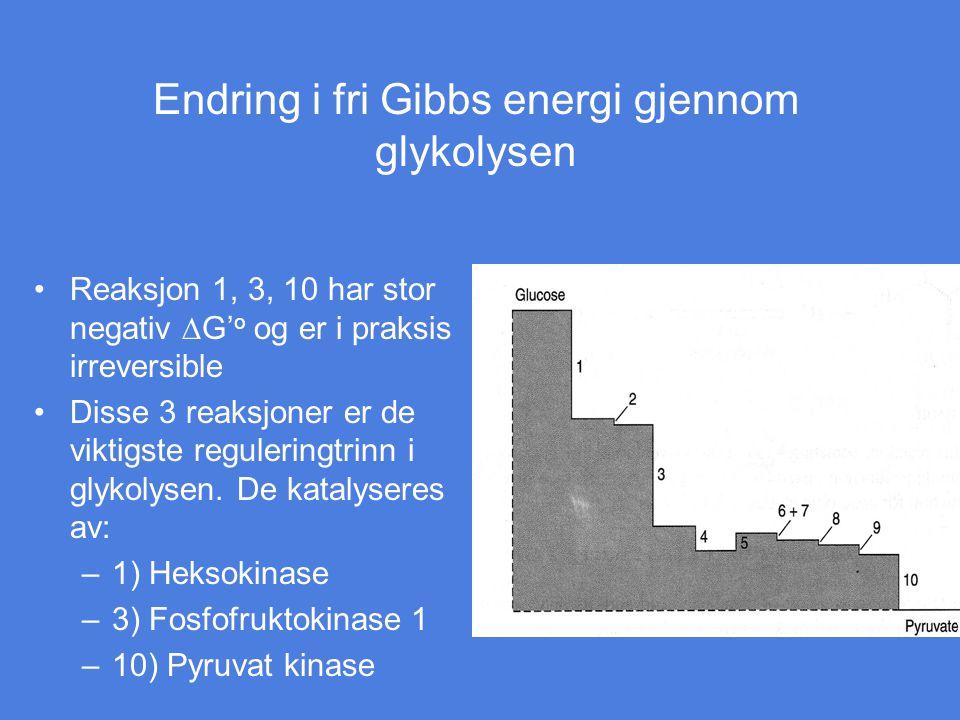 Endring i fri Gibbs energi gjennom glykolysen