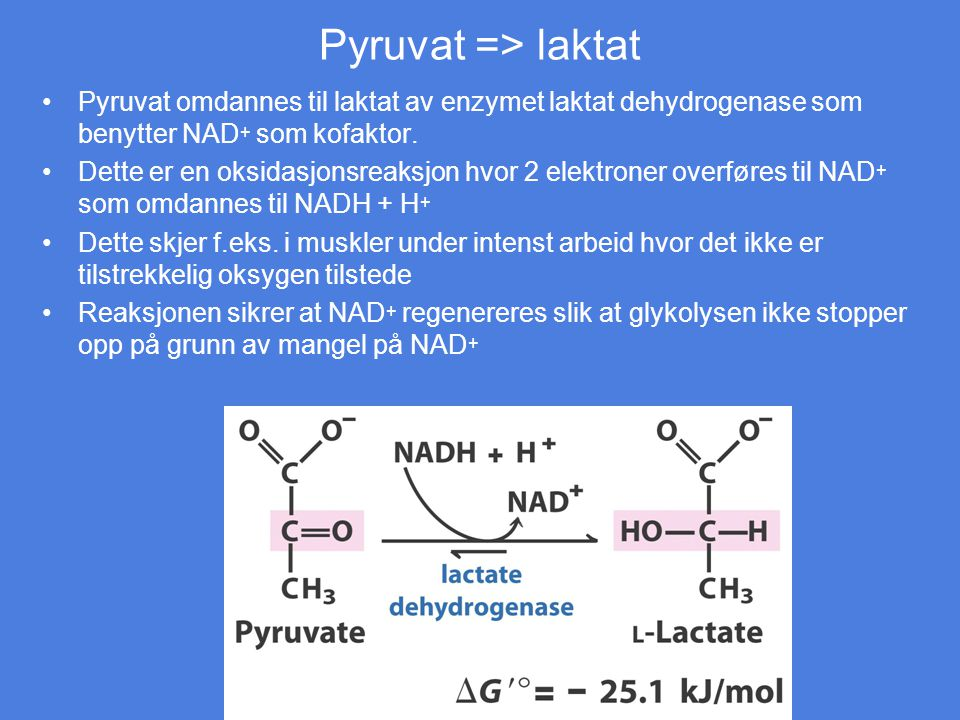 Pyruvat => laktat Pyruvat omdannes til laktat av enzymet laktat dehydrogenase som benytter NAD+ som kofaktor.