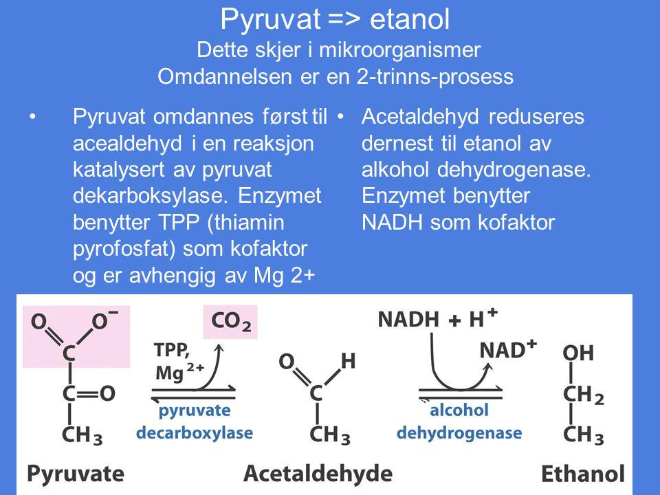 Pyruvat => etanol Dette skjer i mikroorganismer Omdannelsen er en 2-trinns-prosess