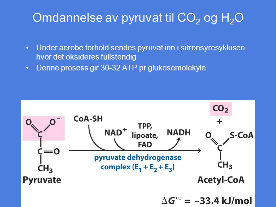 Omdannelse av pyruvat til CO2 og H2O