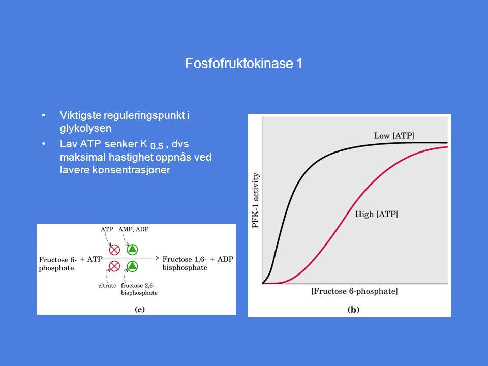 Fosfofruktokinase 1 Viktigste reguleringspunkt i glykolysen