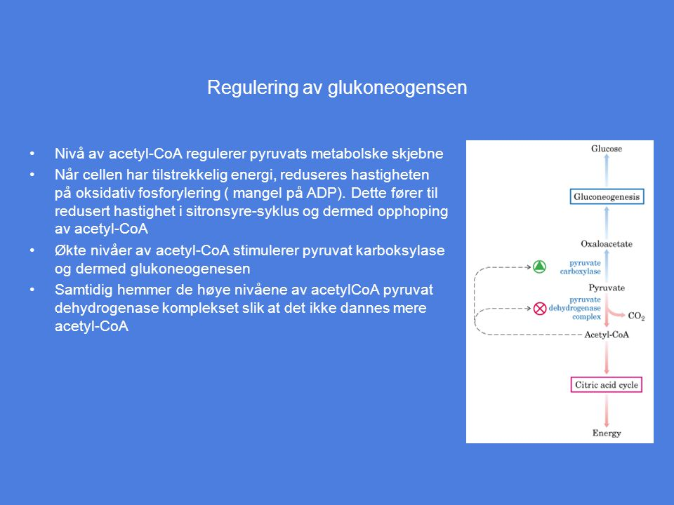 Regulering av glukoneogensen