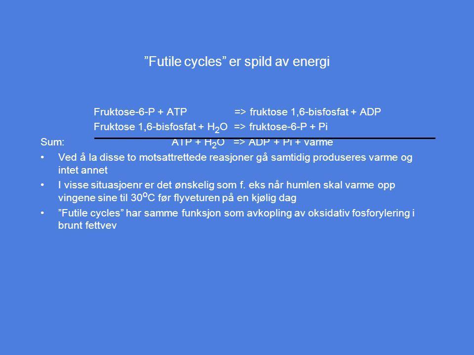 Futile cycles er spild av energi