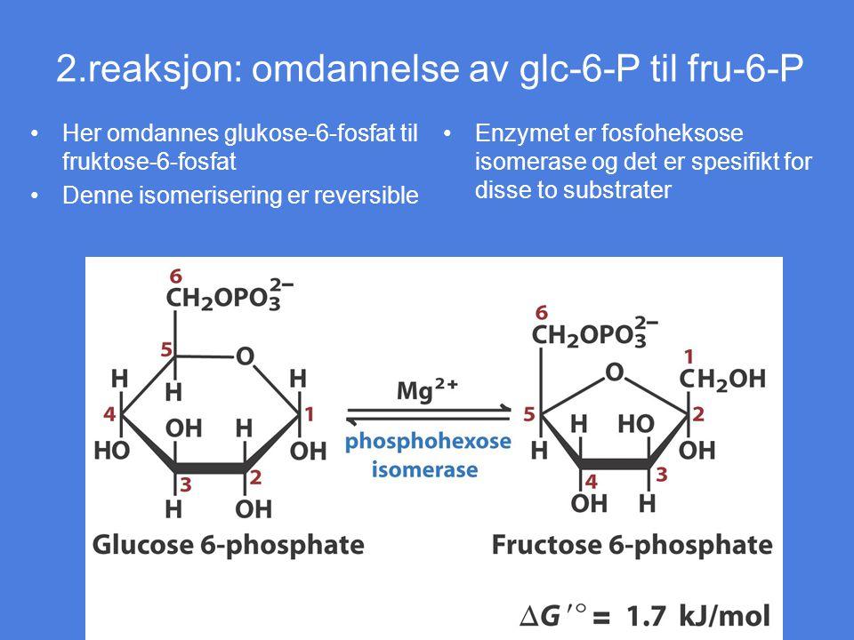 2.reaksjon: omdannelse av glc-6-P til fru-6-P