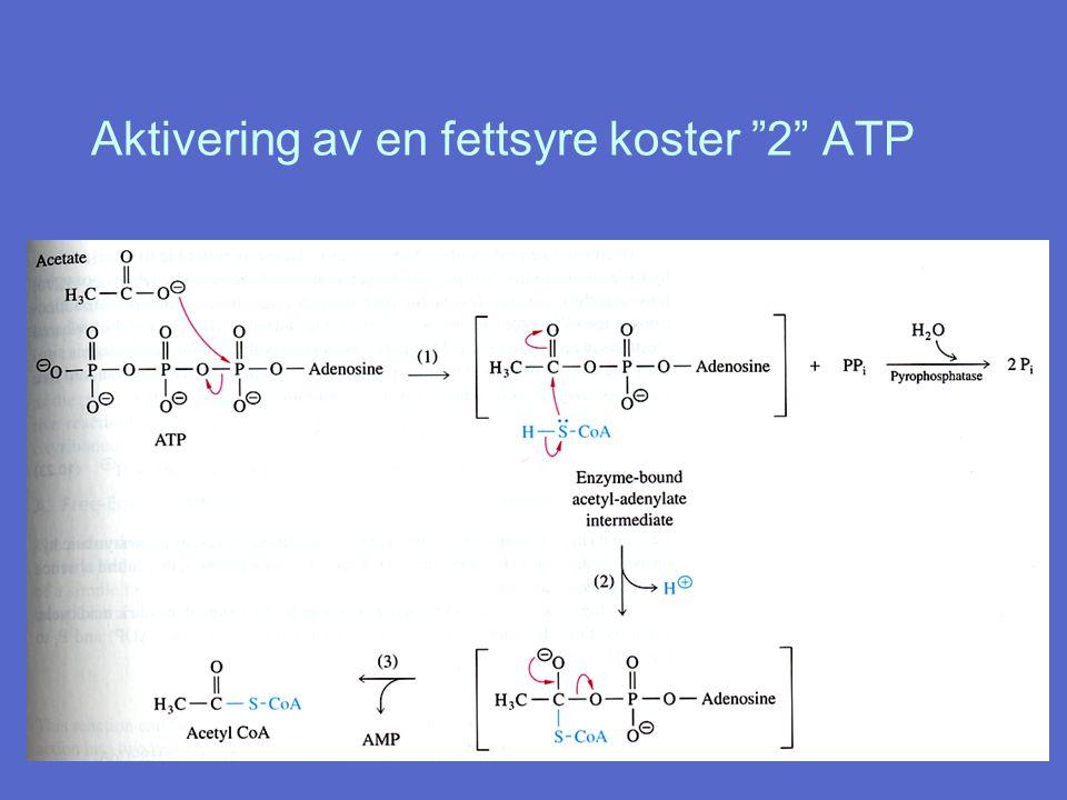Aktivering av en fettsyre koster 2 ATP