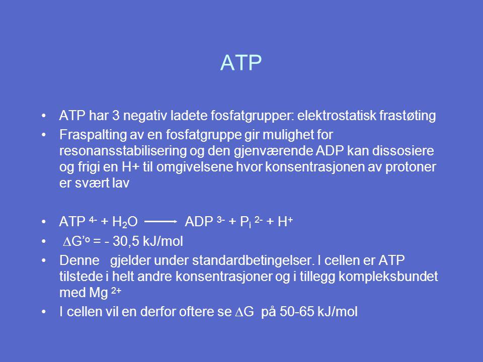 ATP ATP har 3 negativ ladete fosfatgrupper: elektrostatisk frastøting