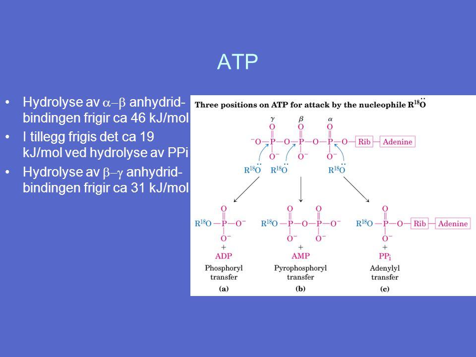 ATP Hydrolyse av a-b anhydrid-bindingen frigir ca 46 kJ/mol