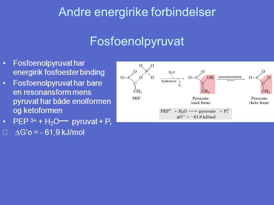 Andre energirike forbindelser Fosfoenolpyruvat
