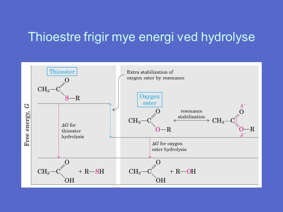 Thioestre frigir mye energi ved hydrolyse