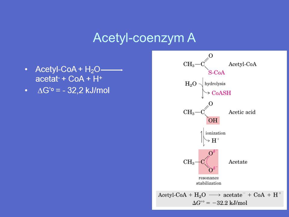 Acetyl-coenzym A Acetyl-CoA + H2O acetat- + CoA + H+