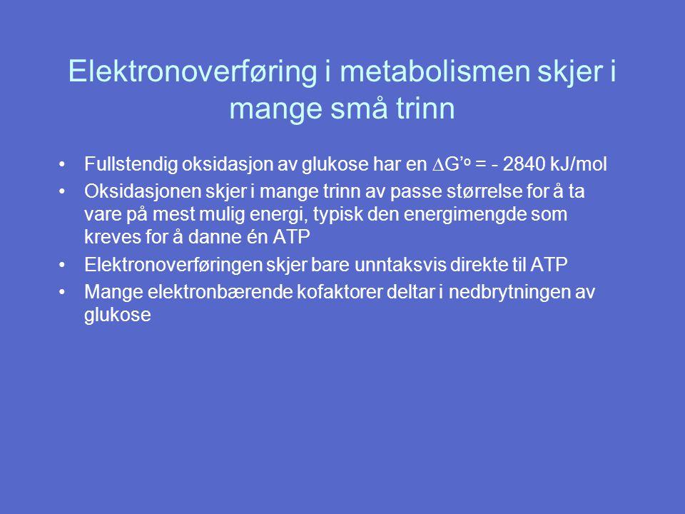 Elektronoverføring i metabolismen skjer i mange små trinn