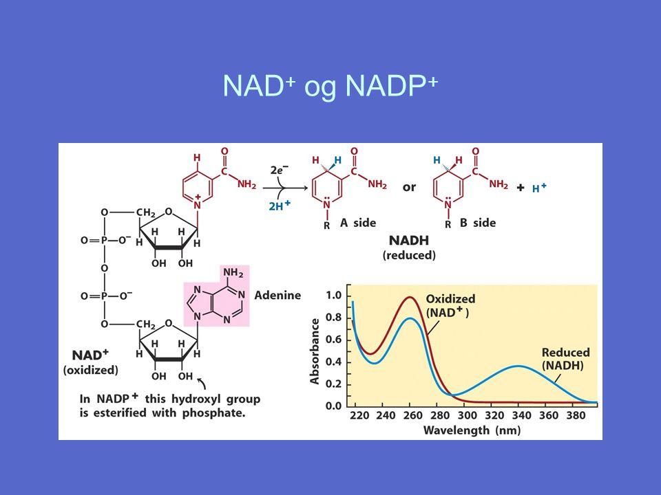 NAD+ og NADP+