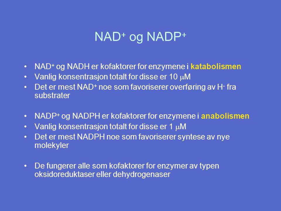 NAD+ og NADP+ NAD+ og NADH er kofaktorer for enzymene i katabolismen