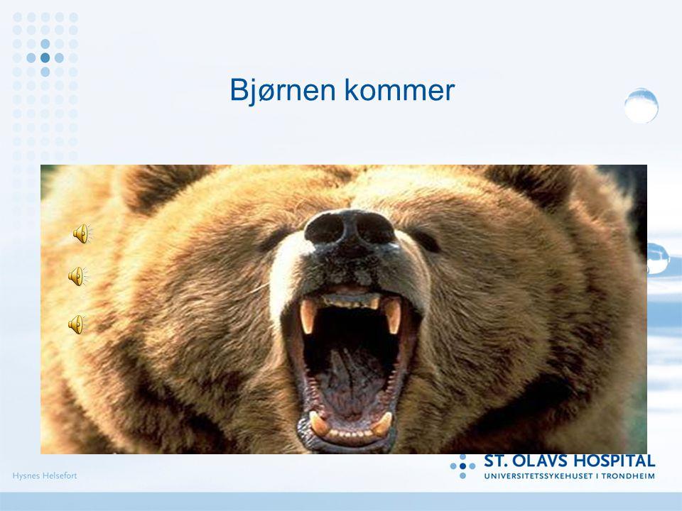 Bjørnen kommer