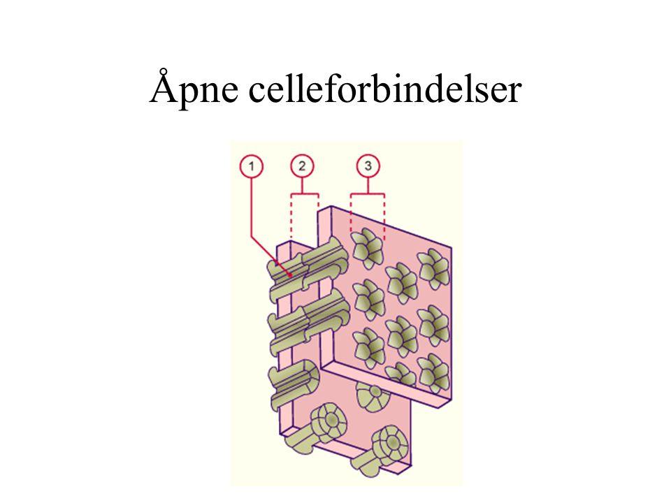Åpne celleforbindelser