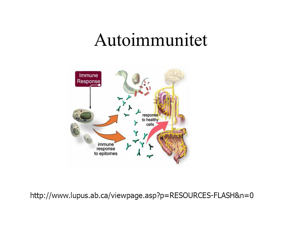 Autoimmunitet http://www.lupus.ab.ca/viewpage.asp p=RESOURCES-FLASH&n=0
