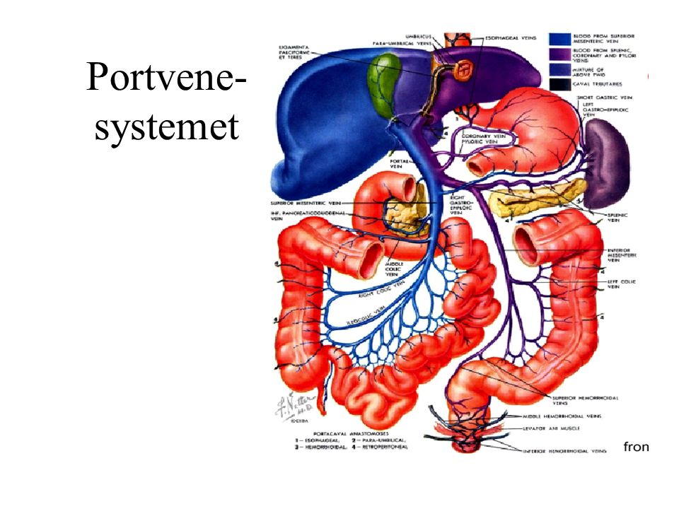 Portvene- systemet
