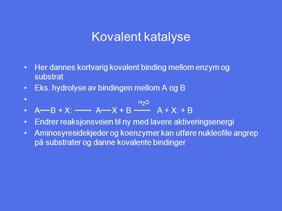 Kovalent katalyse Her dannes kortvarig kovalent binding mellom enzym og substrat. Eks. hydrolyse av bindingen mellom A og B.